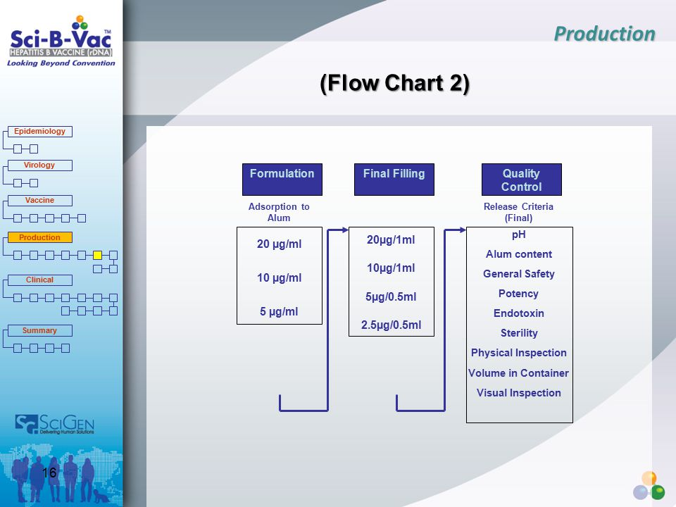 (Flow Chart 2) Formulation Adsorption to Alum 20 µg/ml 10 µg/ml 5 µg/ml Final FillingQuality Control Release Criteria (Final) pH Alum content General Safety Potency Endotoxin Sterility Physical Inspection Volume in Container Visual Inspection 20µg/1ml 10µg/1ml 5µg/0.5ml 2.5µg/0.5ml Production Epidemiology Virology Vaccine Production Clinical Summary 16