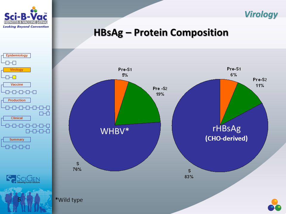 HBsAg – Protein Composition Virology *Wild type rHBsAg (CHO-derived) WHBV* Epidemiology Virology Vaccine Production Clinical Summary 5