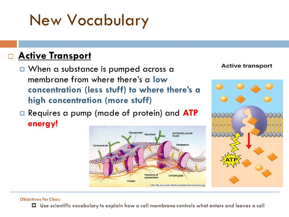  Active Transport  When a substance is pumped across a membrane from where there's a low concentration (less stuff) to where there's a high concentration (more stuff)  Requires a pump (made of protein) and ATP energy.