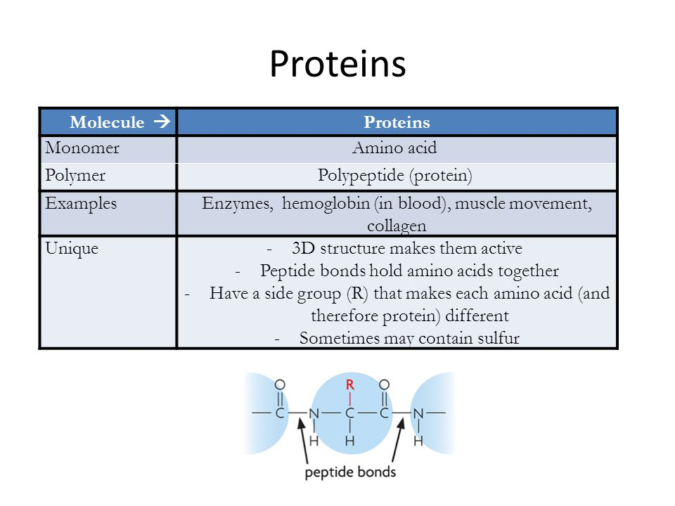 Proteins Molecule  Proteins MonomerAmino acid PolymerPolypeptide (protein) ExamplesEnzymes, hemoglobin (in blood), muscle movement, collagen Unique-3D structure makes them active -Peptide bonds hold amino acids together -Have a side group (R) that makes each amino acid (and therefore protein) different -Sometimes may contain sulfur