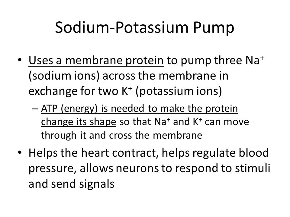 Sodium-Potassium Pump Uses a membrane protein to pump three Na + (sodium ions) across the membrane in exchange for two K + (potassium ions) – ATP (ene