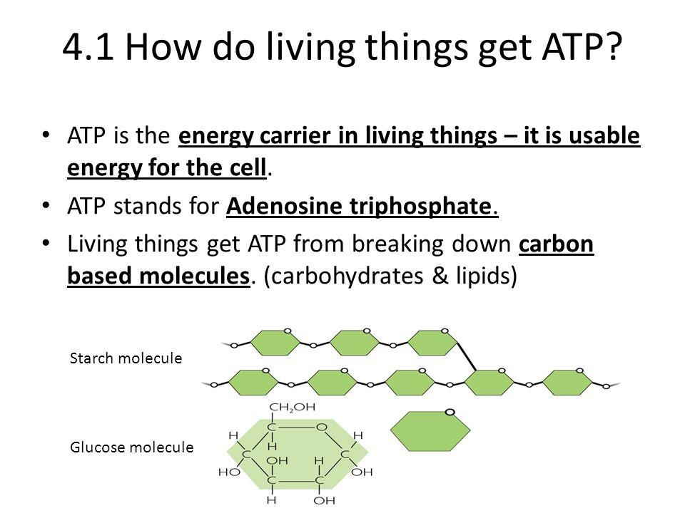 4.1 How do living things get ATP.