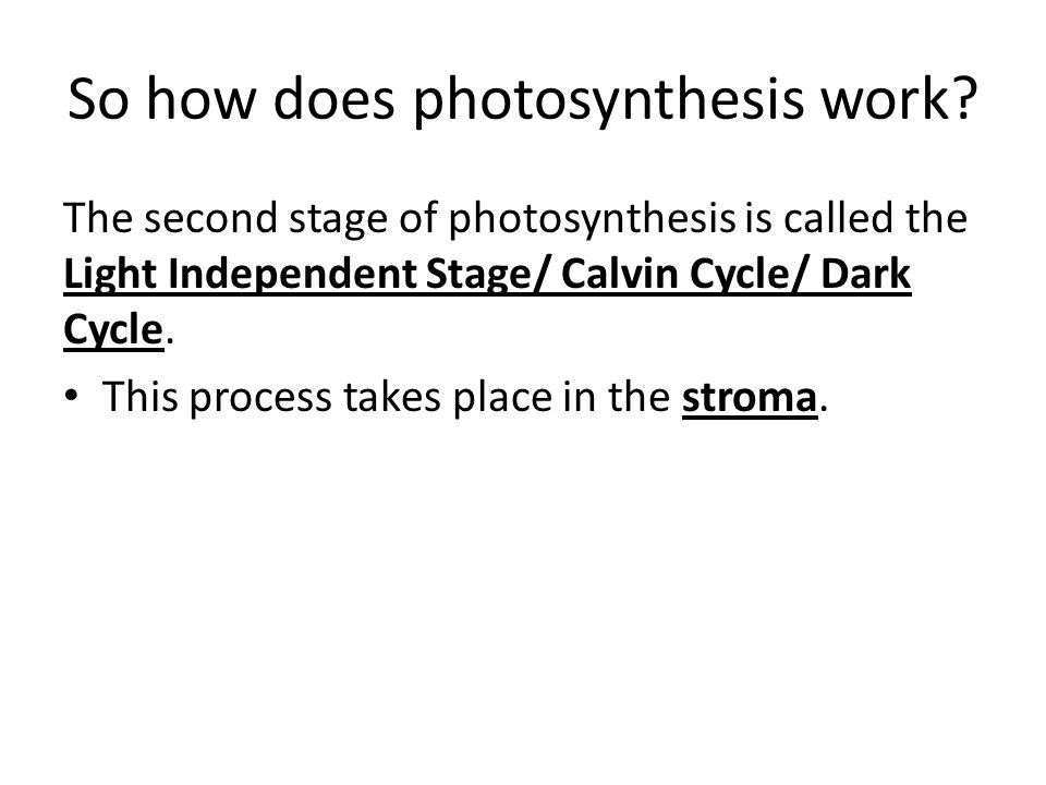 So how does photosynthesis work.