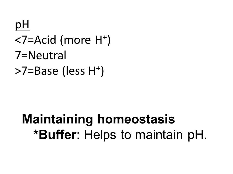 Maintaining homeostasis *Buffer: Helps to maintain pH.