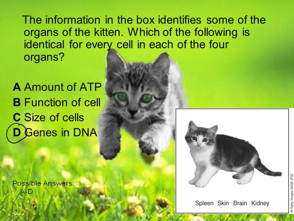 The information in the box identifies some of the organs of the kitten. Which of the following is identical for every cell in each of the four organs?