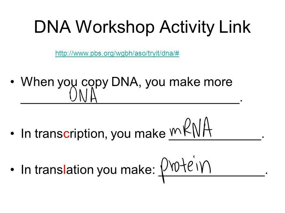 DNA Workshop Activity Link When you copy DNA, you make more _______________________________.