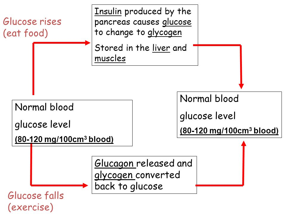 Normal blood glucose level (80-120 mg/100cm 3 blood) Insulin produced by the pancreas causes glucose to change to glycogen Stored in the liver and mus