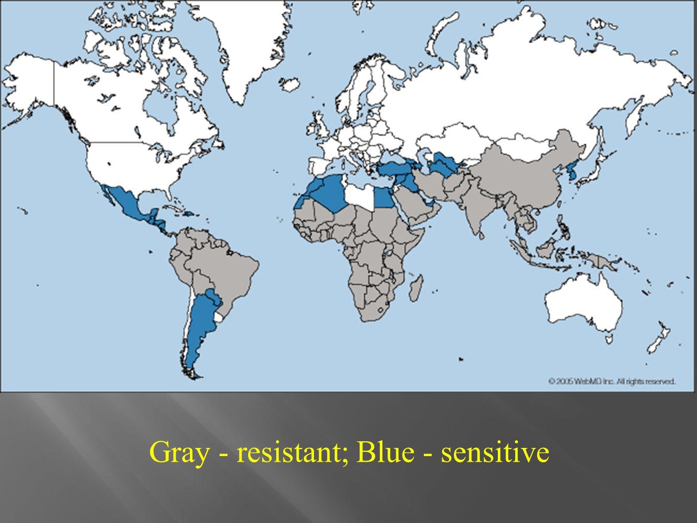 Gray - resistant; Blue - sensitive