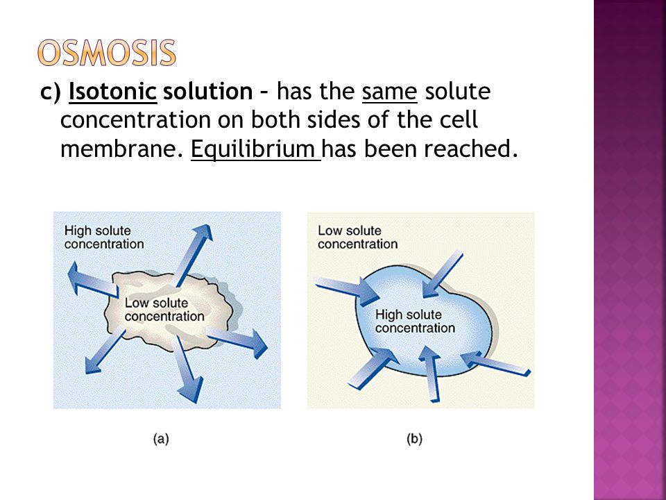 c) Isotonic solution – has the same solute concentration on both sides of the cell membrane.