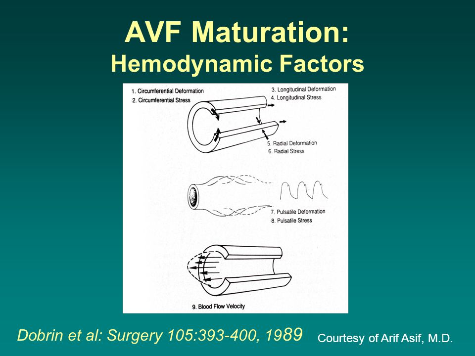 AVF Maturation: Humoral Factors Adaptive Remodeling –Reorganization of cellular and extracellular components Role of Endothelial Cells: –De-endothelialized vessels fail to increase diameter in response to increased blood flow (1, 2) Shear stress: –Apical surface of the endothelial cell –Transduction of hemodynamic forces –Subendothelial compartment Nitric oxide, prostacyclin Activation of a variety of transcription factors and matrix metalloproteinases (3) –NO and MMPs: Appear to play a major role.
