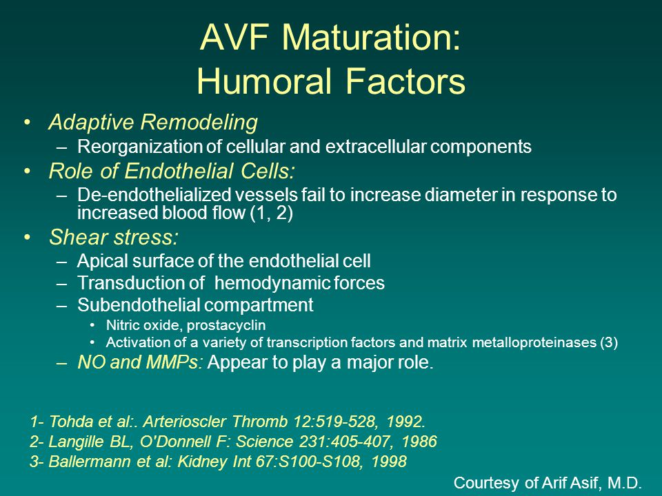 AVF Maturation: Humoral Factors Adaptive Remodeling –Reorganization of cellular and extracellular components Role of Endothelial Cells: –De-endothelia