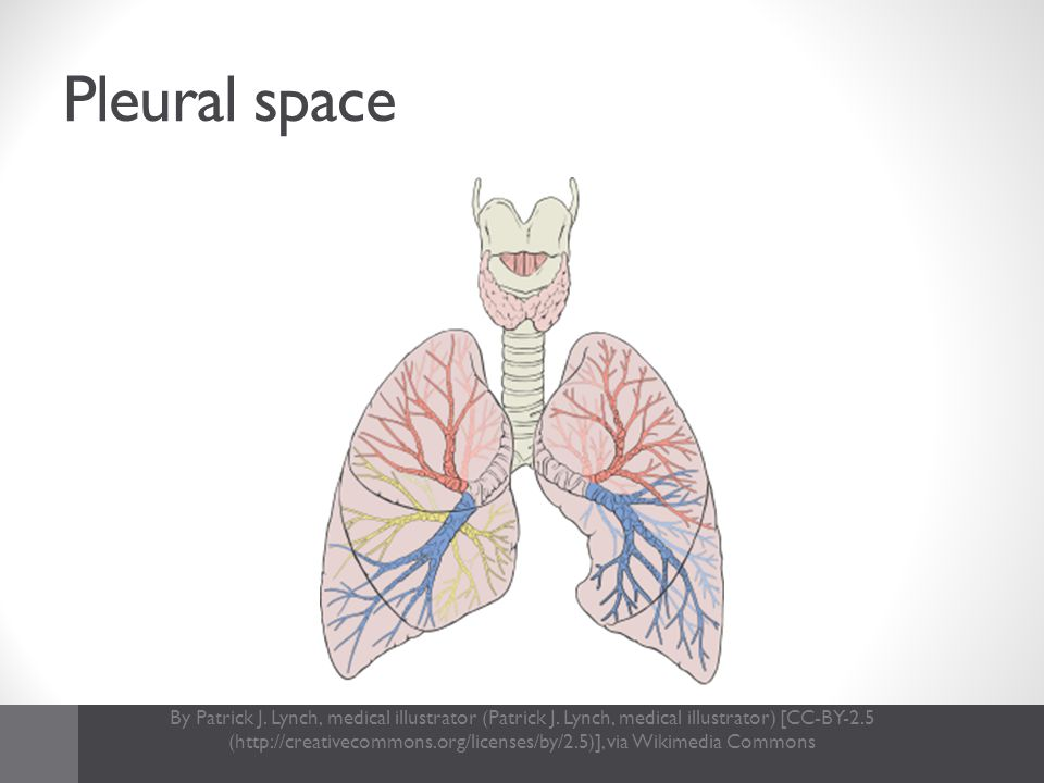Pleural space By Patrick J. Lynch, medical illustrator (Patrick J. Lynch, medical illustrator) [CC-BY-2.5 (http://creativecommons.org/licenses/by/2.5)