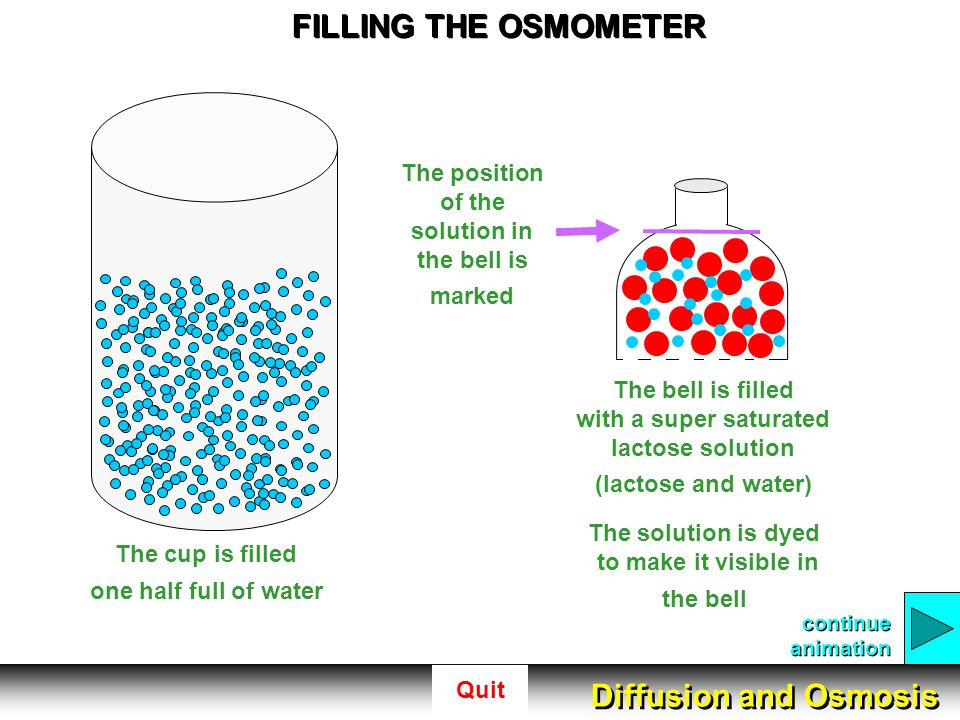 Quit FILLING THE OSMOMETER The cup is filled one half full of water The bell is filled with a super saturated lactose solution (lactose and water) The