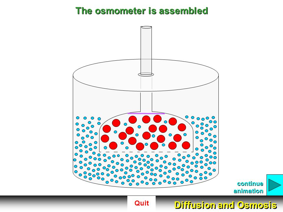 Quit The osmometer is assembled continue animation Diffusion and Osmosis