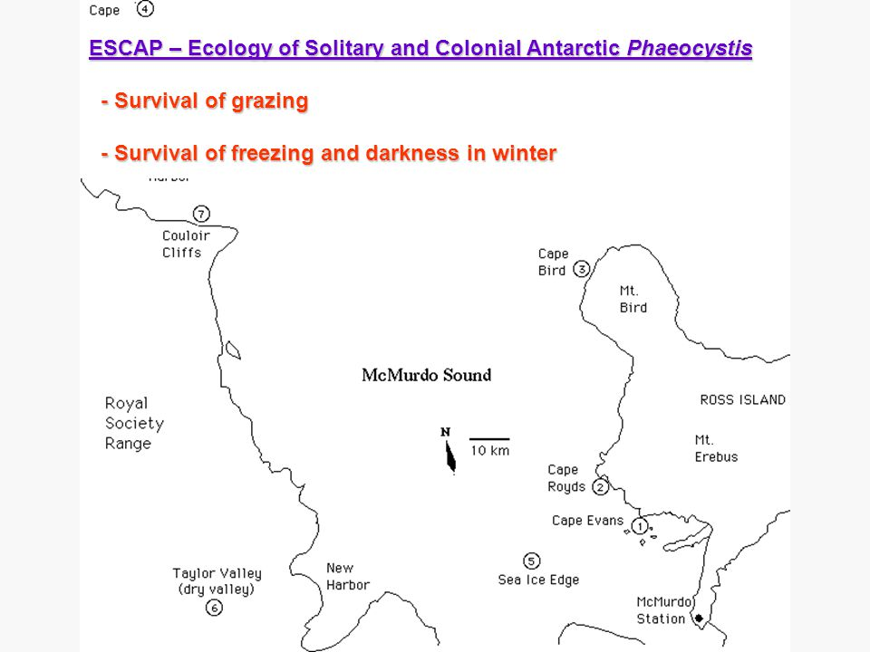 ESCAP – Ecology of Solitary and Colonial Antarctic Phaeocystis - Survival of grazing - Survival of grazing - Survival of freezing and darkness in winter - Survival of freezing and darkness in winter