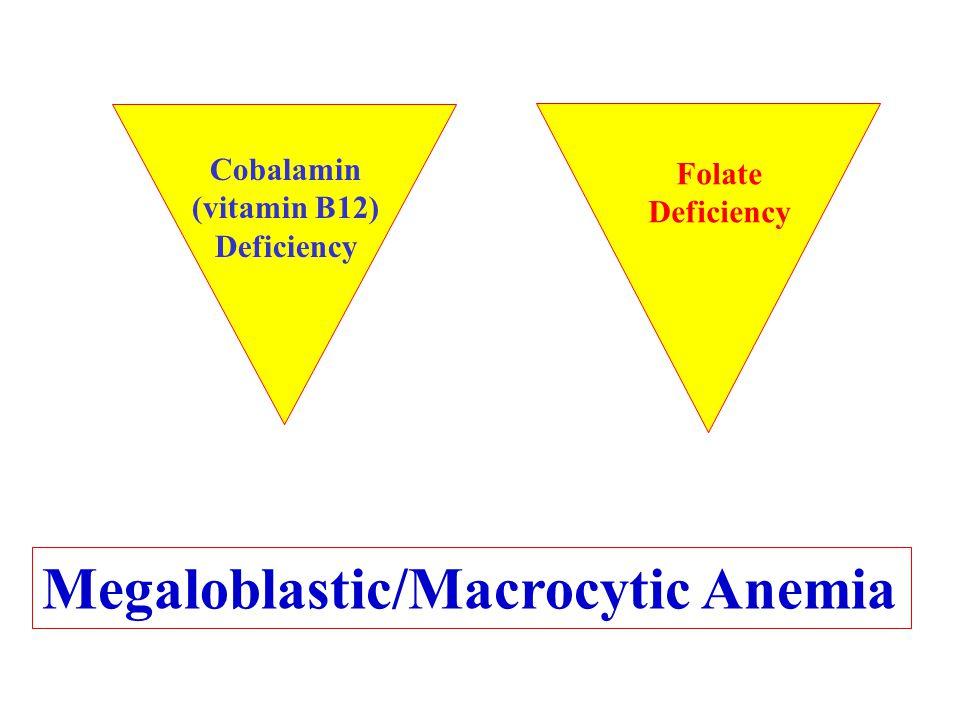 Megaloblastic/Macrocytic Anemia Cobalamin (vitamin B12) Deficiency Folate Deficiency