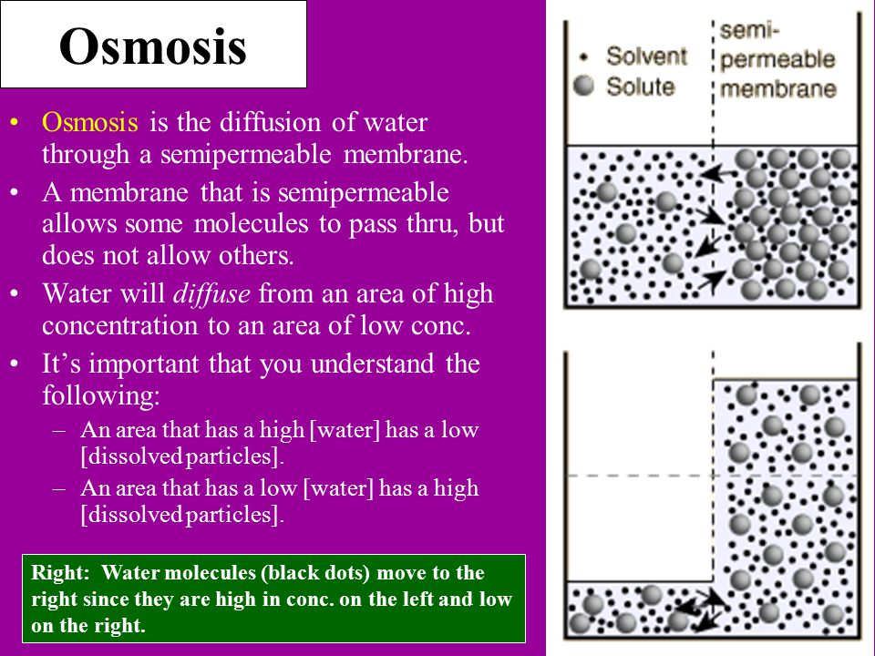 Osmosis Osmosis is the diffusion of water through a semipermeable membrane.