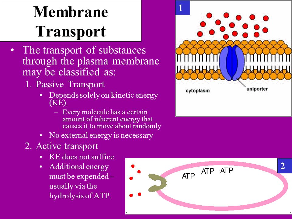 Membrane Transport The transport of substances through the plasma membrane may be classified as: 1.Passive Transport Depends solely on kinetic energy (KE).
