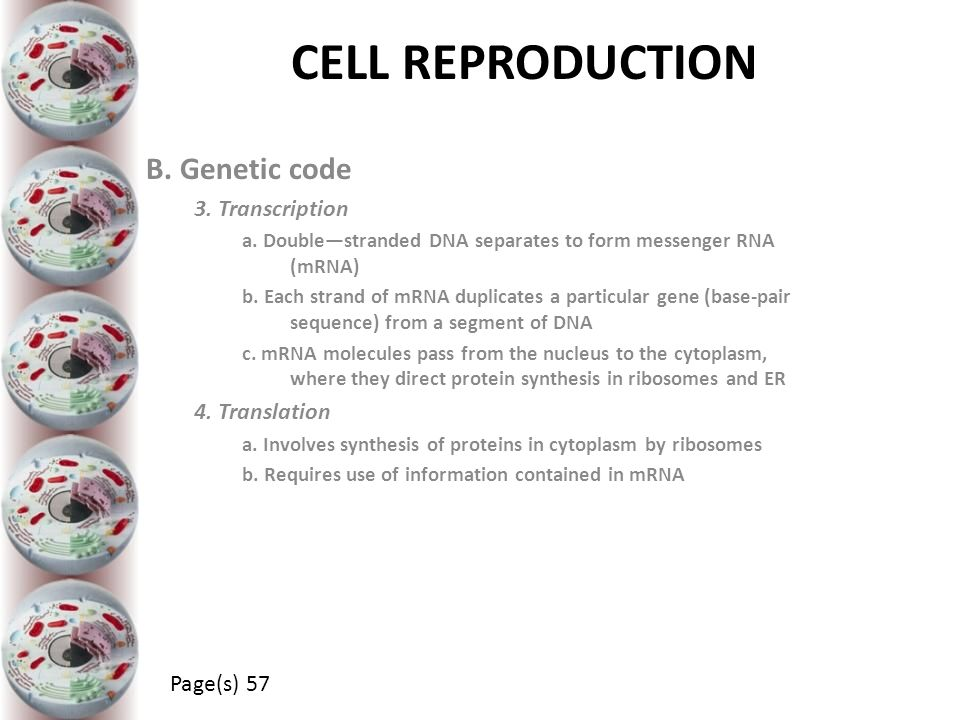 CELL REPRODUCTION B. Genetic code 3. Transcription a. Double—stranded DNA separates to form messenger RNA (mRNA) b. Each strand of mRNA duplicates a p