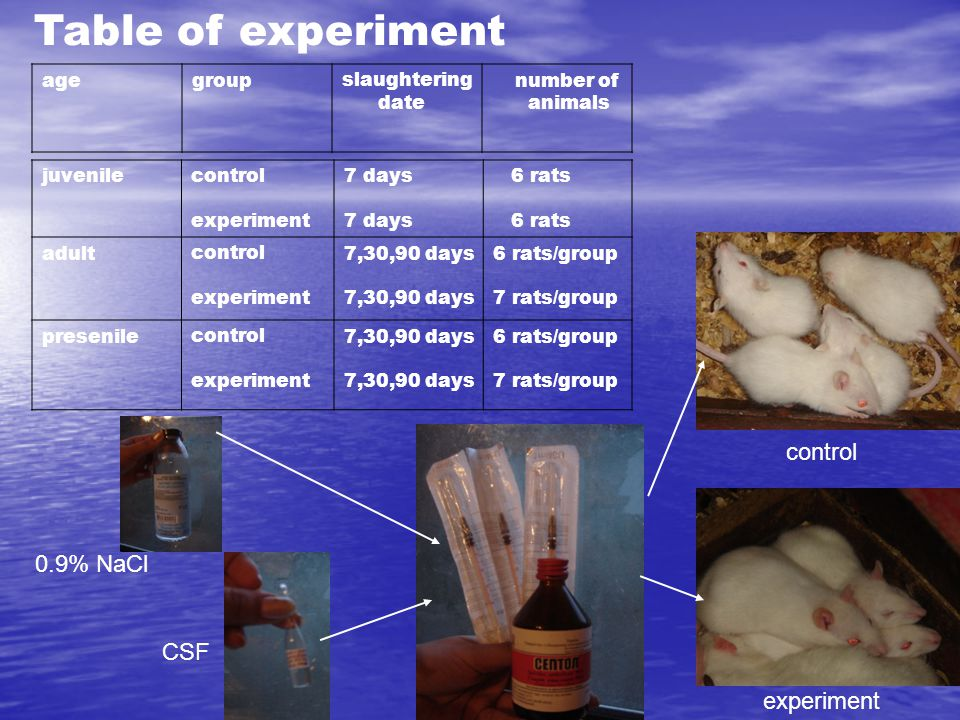 juvenilecontrol experiment 7 days 6 rats adultcontrol experiment 7,30,90 days 6 rats/group 7 rats/group presenilecontrol experiment 7,30,90 days 6 rat