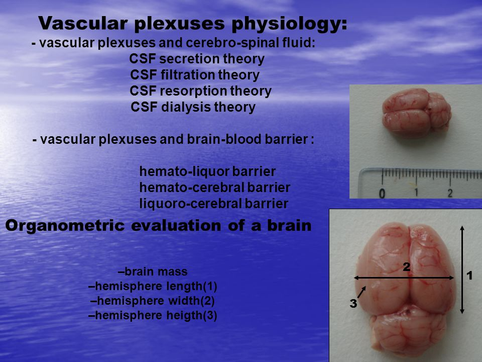 Vascular plexuses physiology: - vascular plexuses and cerebro-spinal fluid: CSF secretion theory CSF filtration theory CSF resorption theory CSF dialysis theory - vascular plexuses and brain-blood barrier : hemato-liquor barrier hemato-cerebral barrier liquoro-cerebral barrier Organometric evaluation of a brain –brain mass –hemisphere length(1) –hemisphere width(2) –hemisphere heigth(3) 2 1 3