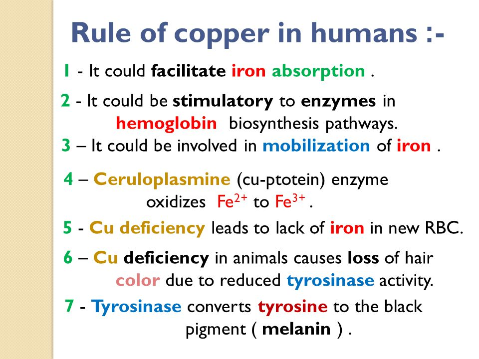 -: Rule of copper in humans 1 - It could facilitate iron absorption.