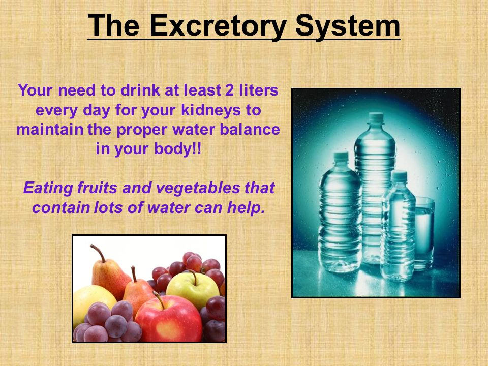 The Excretory System Your need to drink at least 2 liters every day for your kidneys to maintain the proper water balance in your body!.