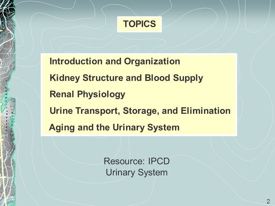 3 Introduction and Organization Objectives Discuss the role of the urinary system.