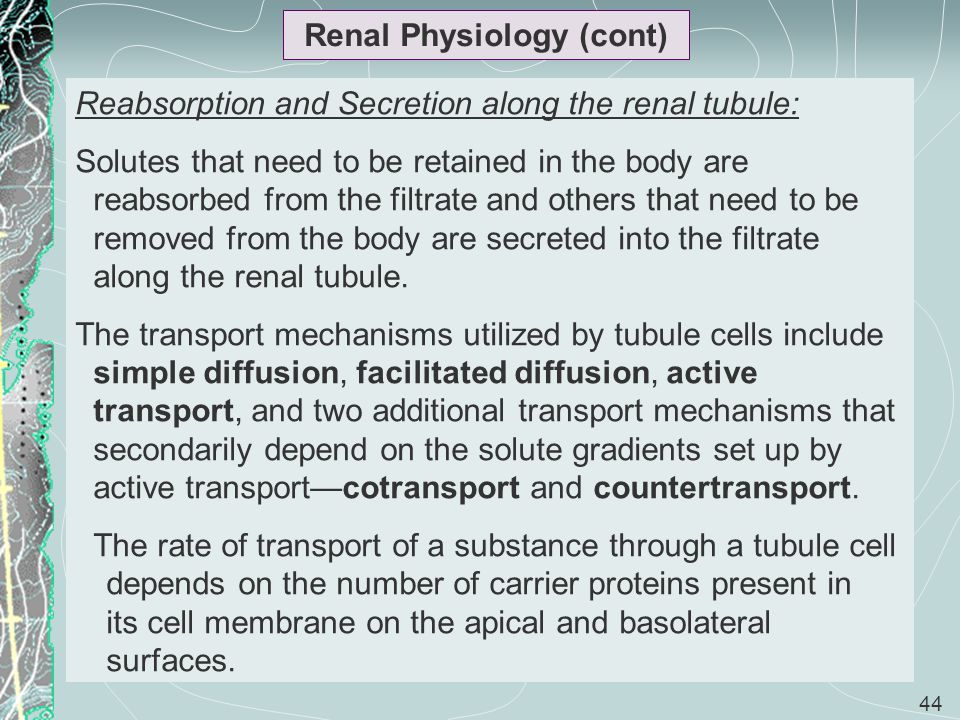 44 Renal Physiology (cont) Reabsorption and Secretion along the renal tubule: Solutes that need to be retained in the body are reabsorbed from the fil