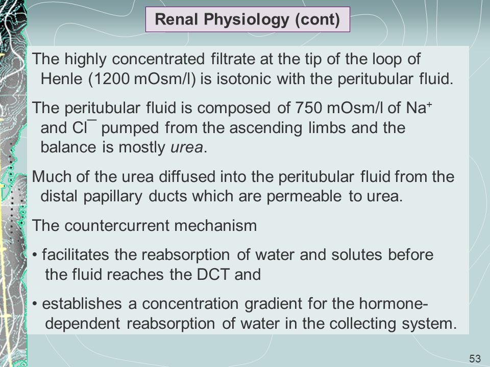 53 Renal Physiology (cont) The highly concentrated filtrate at the tip of the loop of Henle (1200 mOsm/l) is isotonic with the peritubular fluid. The