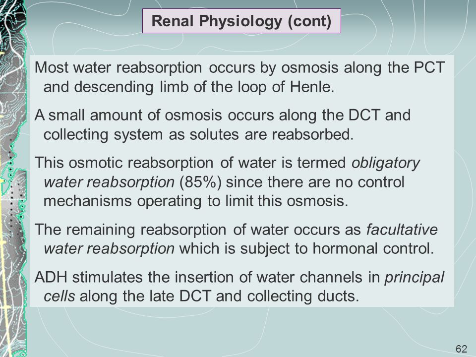 62 Renal Physiology (cont) Most water reabsorption occurs by osmosis along the PCT and descending limb of the loop of Henle. A small amount of osmosis