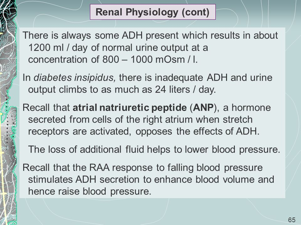 65 Renal Physiology (cont) There is always some ADH present which results in about 1200 ml / day of normal urine output at a concentration of 800 – 10