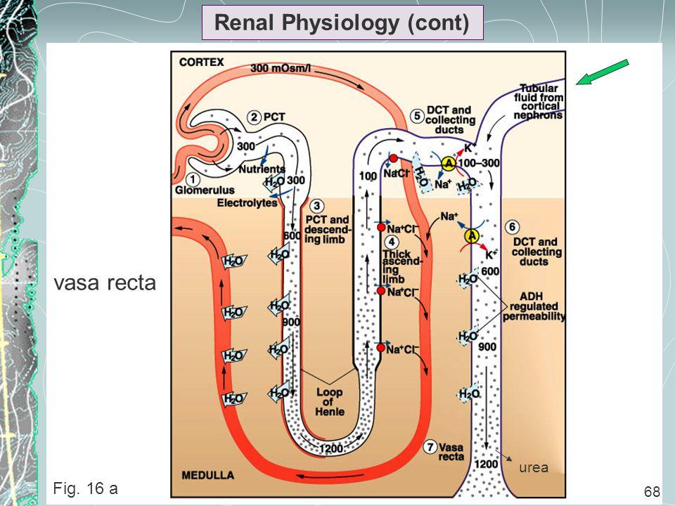 68 Renal Physiology (cont) Fig. 16 a 68 urea vasa recta
