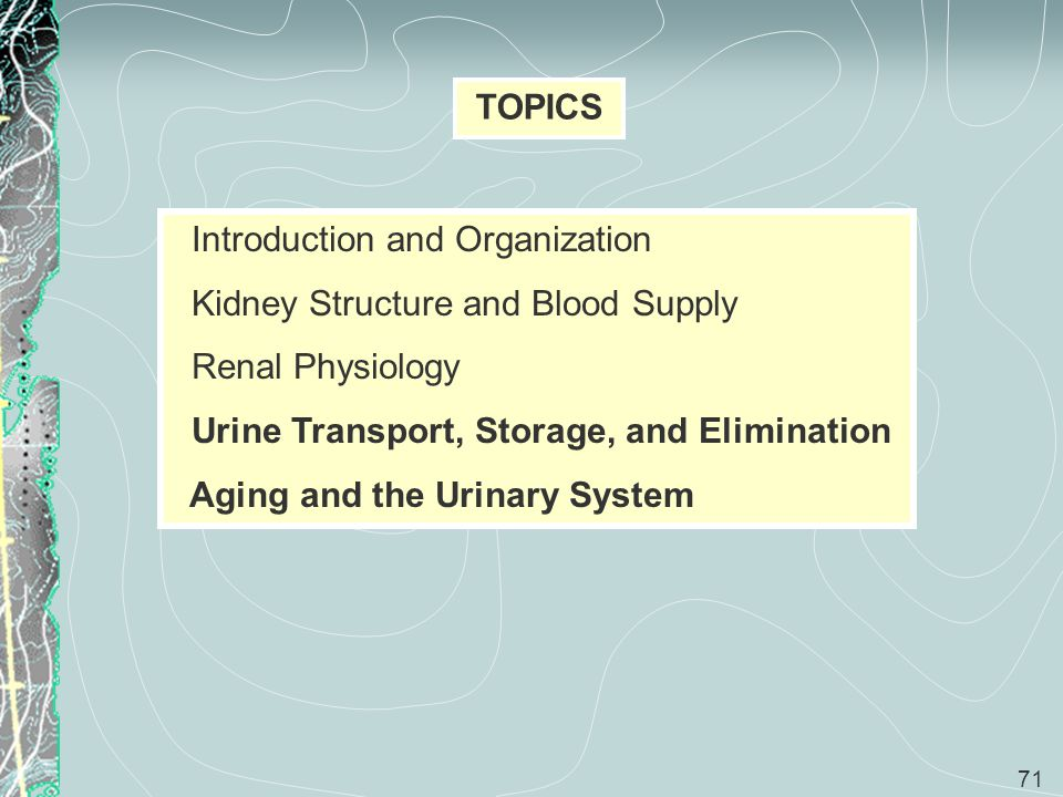 71 TOPICS Introduction and Organization Kidney Structure and Blood Supply Renal Physiology Urine Transport, Storage, and Elimination Aging and the Uri