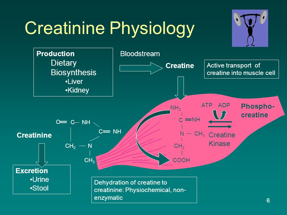 6 Creatinine Physiology NH C N CH 3 CH 2 C NH Creatinine NH 2 C NCH 3 CH 2 COOH NH O Creatine Active transport of creatine into muscle cell Dehydration of creatine to creatinine: Physiochemical, non- enzymatic Production Dietary Biosynthesis Liver Kidney Bloodstream Creatine Kinase Phospho- creatine Excretion Urine Stool ADPATP