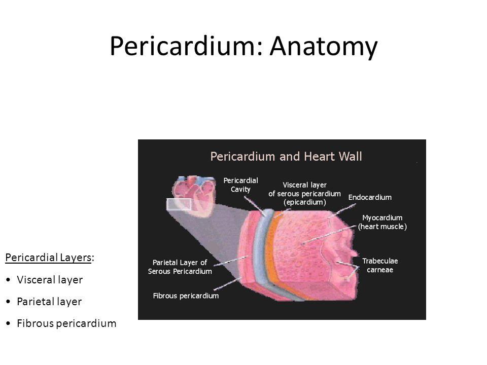 Pericardium: Anatomy Pericardial Layers: Visceral layer Parietal layer Fibrous pericardium