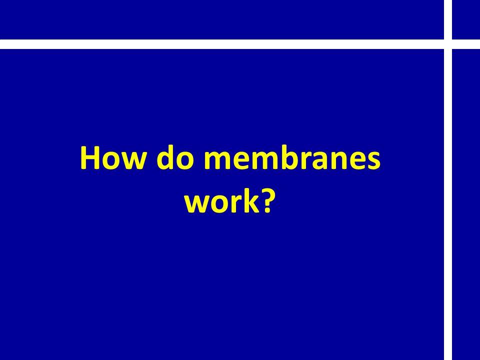 How do membranes work?