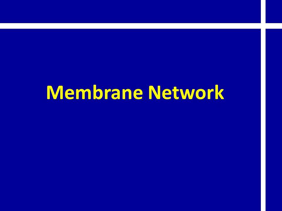 Membrane Network