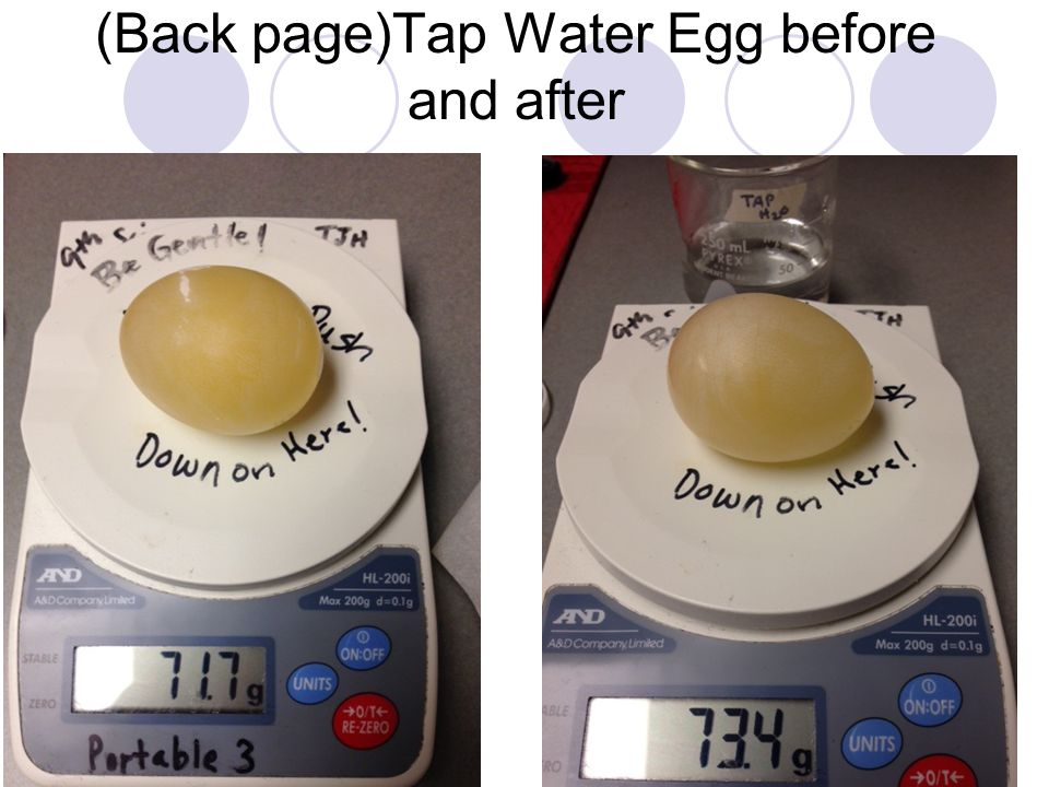 (Back page)Tap Water Egg before and after