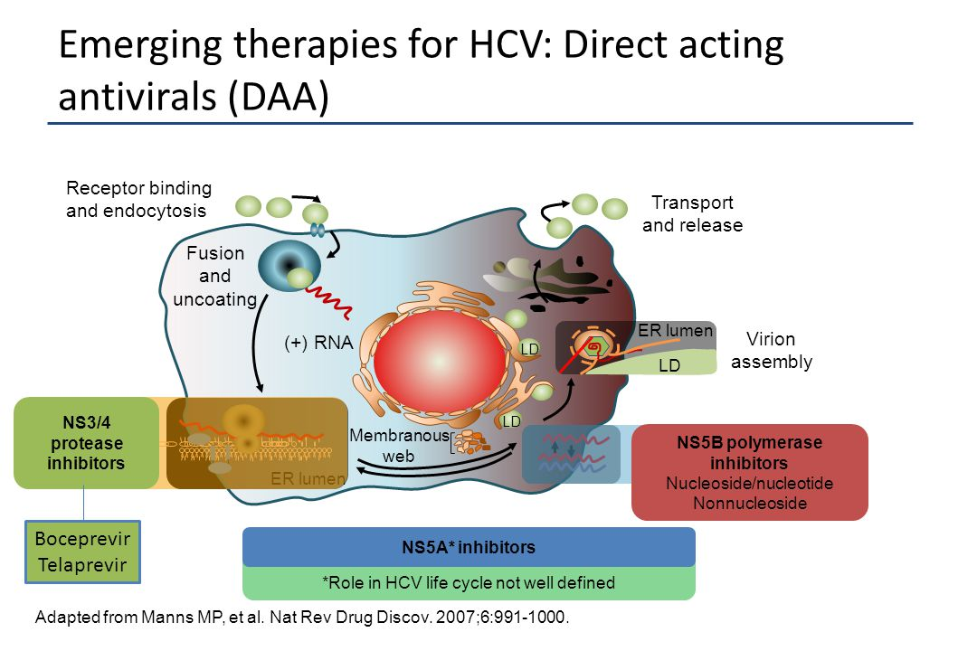 Emerging therapies for HCV: Direct acting antivirals (DAA) Adapted from Manns MP, et al. Nat Rev Drug Discov. 2007;6:991-1000. Receptor binding and en