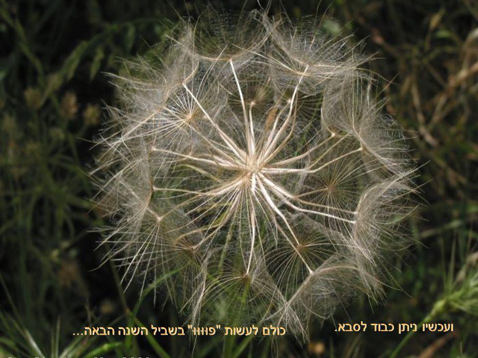 הכדורגל הזה הוא ערכת זרעים של צמח ששמו תגית. כל זרע מוקף עטרה, הנושאת אותו ברוח