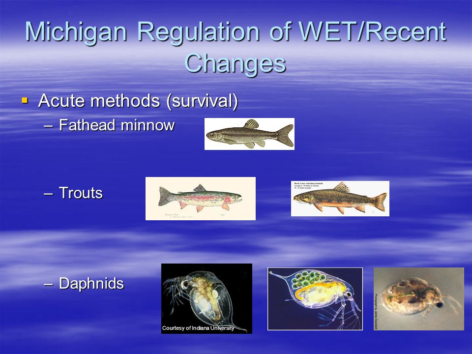  Acute methods (survival) –Fathead minnow –Trouts –Daphnids Courtesy of Indiana University