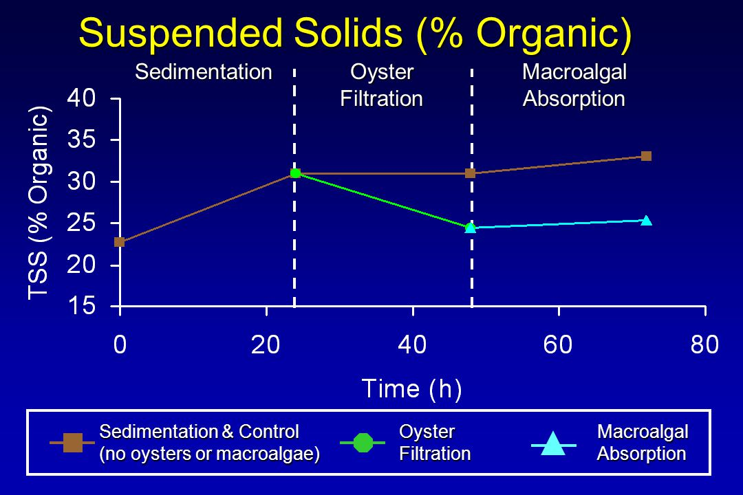 Suspended Solids (% Organic) Sedimentation & Control (no oysters or macroalgae) OysterFiltrationMacroalgalAbsorption Sedimentation Oyster Filtration MacroalgalAbsorption