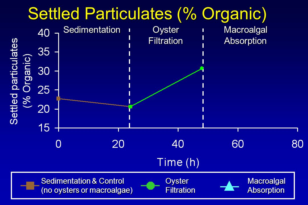 Settled Particulates (% Organic) Sedimentation & Control (no oysters or macroalgae) OysterFiltrationMacroalgalAbsorption Sedimentation Oyster Filtration MacroalgalAbsorption