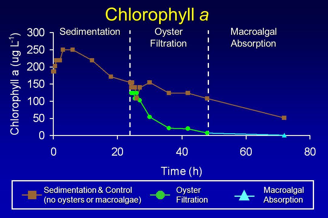 Chlorophyll a Sedimentation & Control (no oysters or macroalgae) OysterFiltrationMacroalgalAbsorption Sedimentation Oyster Filtration MacroalgalAbsorption