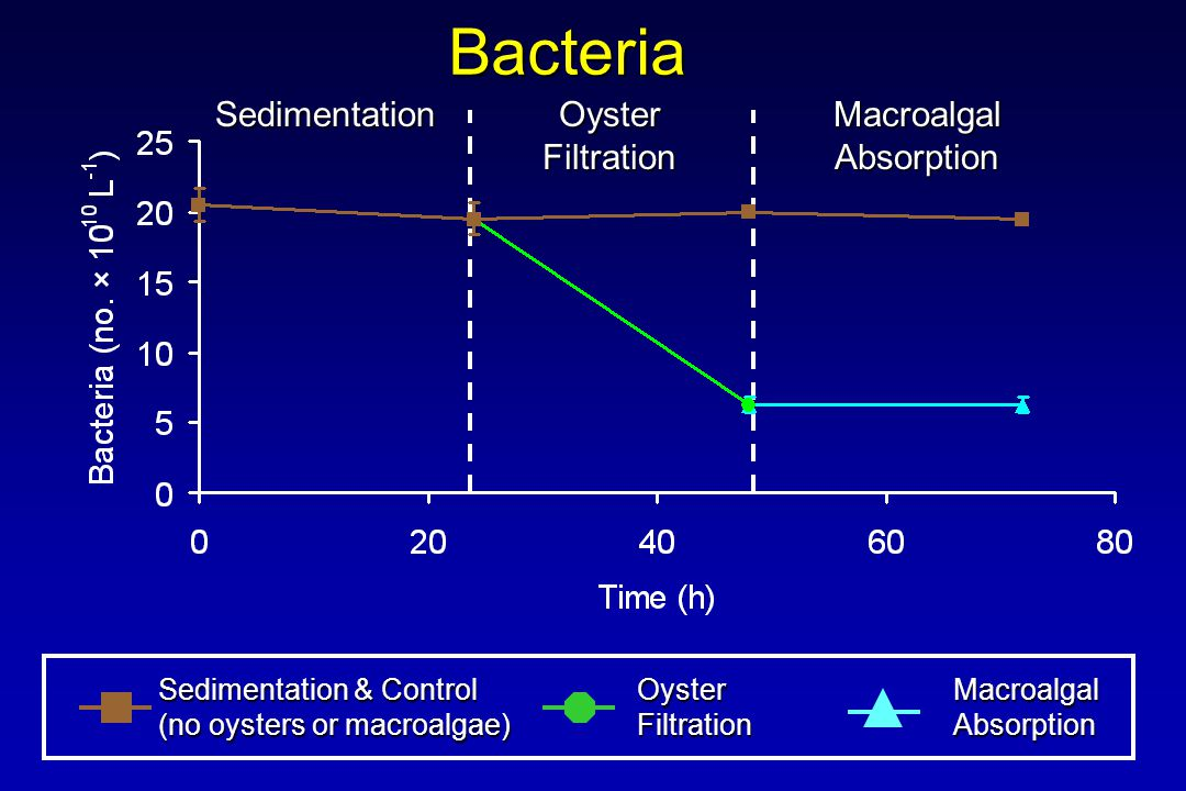 Bacteria Sedimentation & Control (no oysters or macroalgae) OysterFiltrationMacroalgalAbsorption Sedimentation Oyster Filtration MacroalgalAbsorption