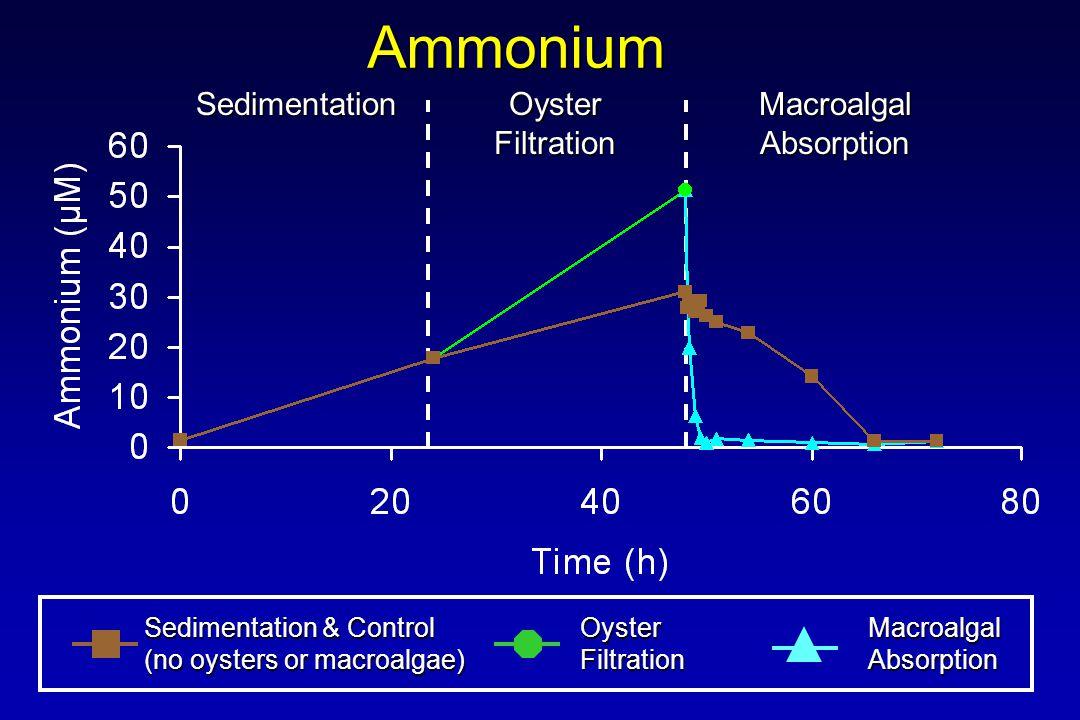 Ammonium Sedimentation & Control (no oysters or macroalgae) OysterFiltrationMacroalgalAbsorption Sedimentation Oyster Filtration MacroalgalAbsorption