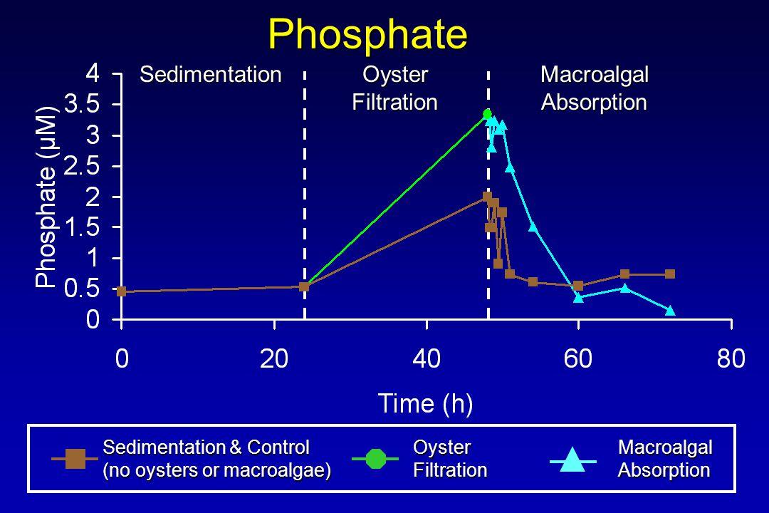 Phosphate Sedimentation & Control (no oysters or macroalgae) OysterFiltrationMacroalgalAbsorption Sedimentation Oyster Filtration MacroalgalAbsorption
