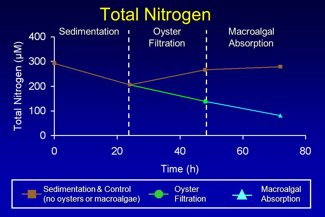 Total Nitrogen Sedimentation & Control (no oysters or macroalgae) OysterFiltrationMacroalgalAbsorption Sedimentation Oyster Filtration MacroalgalAbsorption