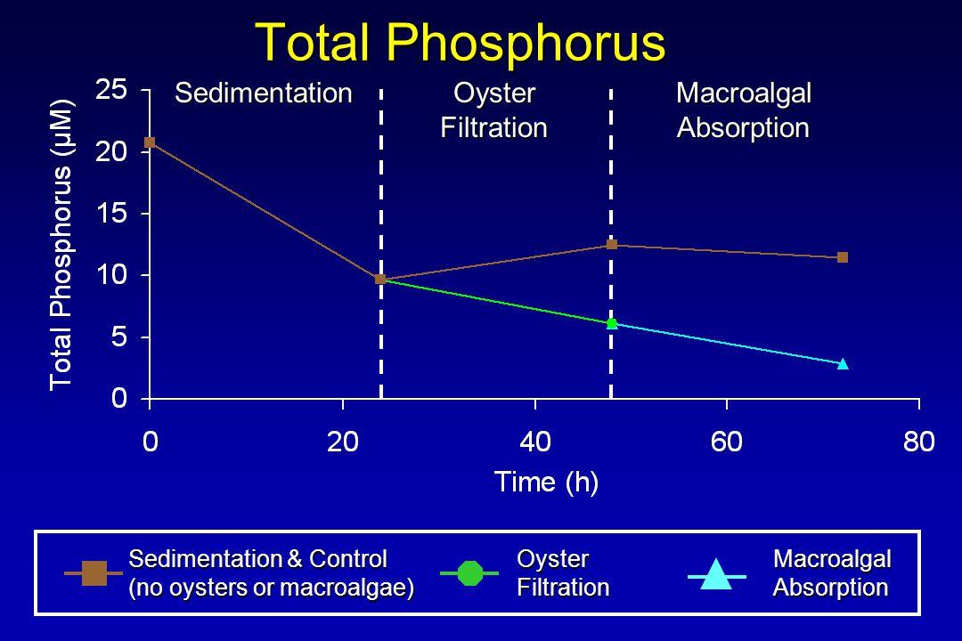 Total Phosphorus Sedimentation & Control (no oysters or macroalgae) OysterFiltrationMacroalgalAbsorption Sedimentation Oyster Filtration MacroalgalAbsorption